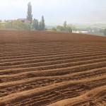 今朝の小豆畑