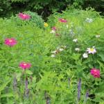 KIZUNAガーデンの花