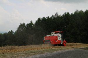 麦の刈り取り