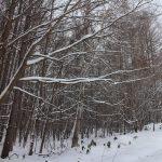 19号線の木