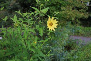 KIZUNAの花