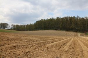 ジャガイモを植えた畑