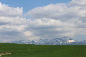 秋まき小麦と山