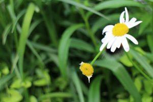 食べられた花びら