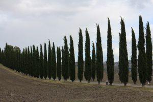 糸杉の風景