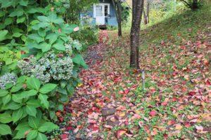 小道と落ち葉