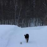 ボールと遊ぶベリー