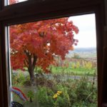 食堂の窓から